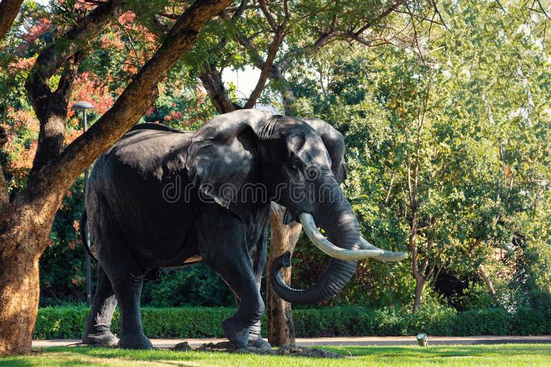 Elephant statue Sun City, Lost City in South Africa stock photos