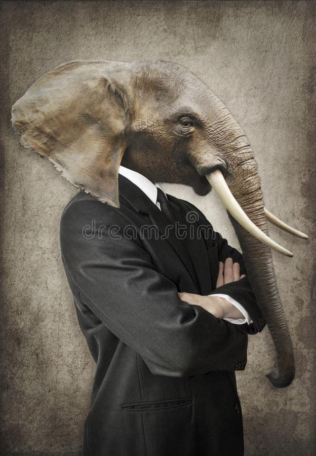 Elephant in a suit. Man with the head of an elephant. Concept gr royalty free stock image
