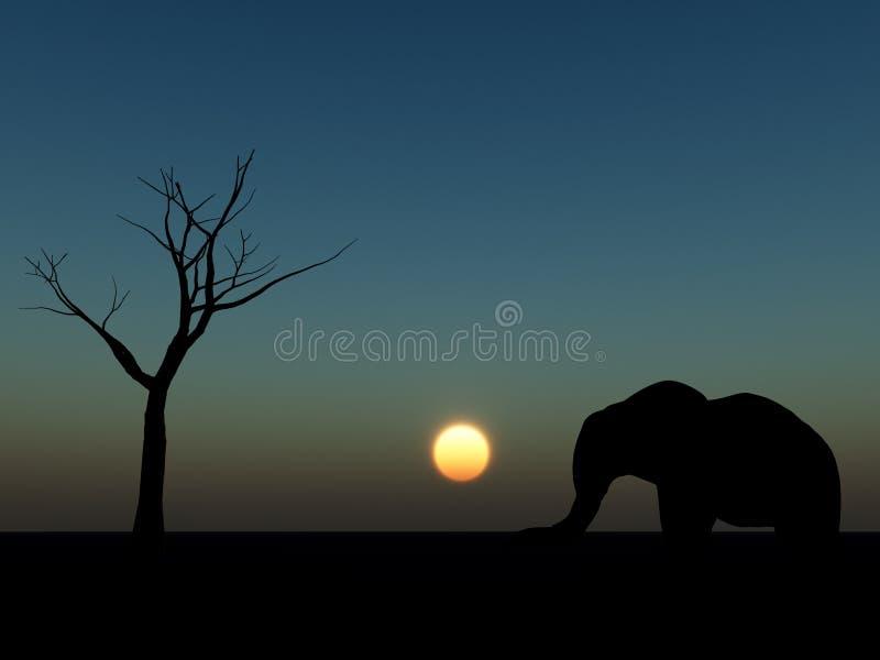 Elephant Sunrise 19 stock photography
