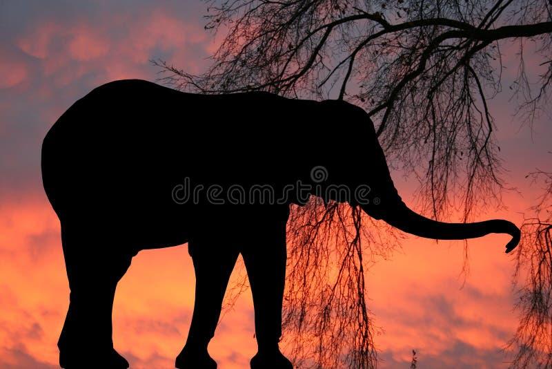 Elephant at sunset royalty free stock photography