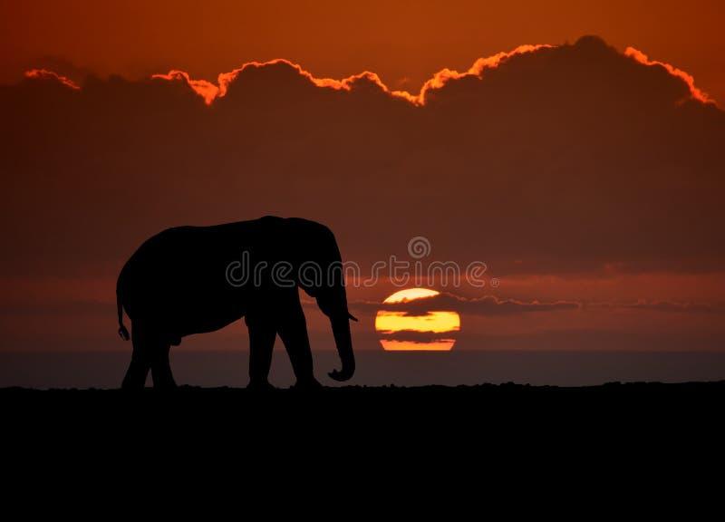Elephant Sunset royalty free stock image