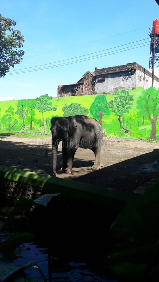 Animal in surabaya zoo. Elephant condition in Surabaya zoo.. Very sad stock photography