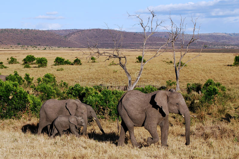 Download Elephant with three babies stock image. Image of leading - 14408589