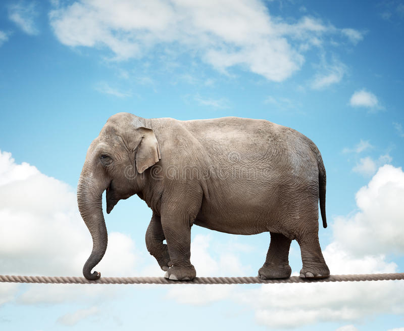 Elephant on a tightrope. Elehant balancing on a tightrope concept for risk, conquering adversity and achievement stock images