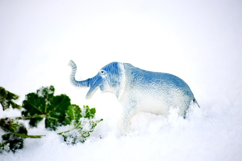 Elephant toy figurine on snow, climate change concept. Image royalty free stock images