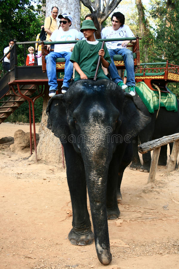 Elephant trekking,Cambodia stock photography