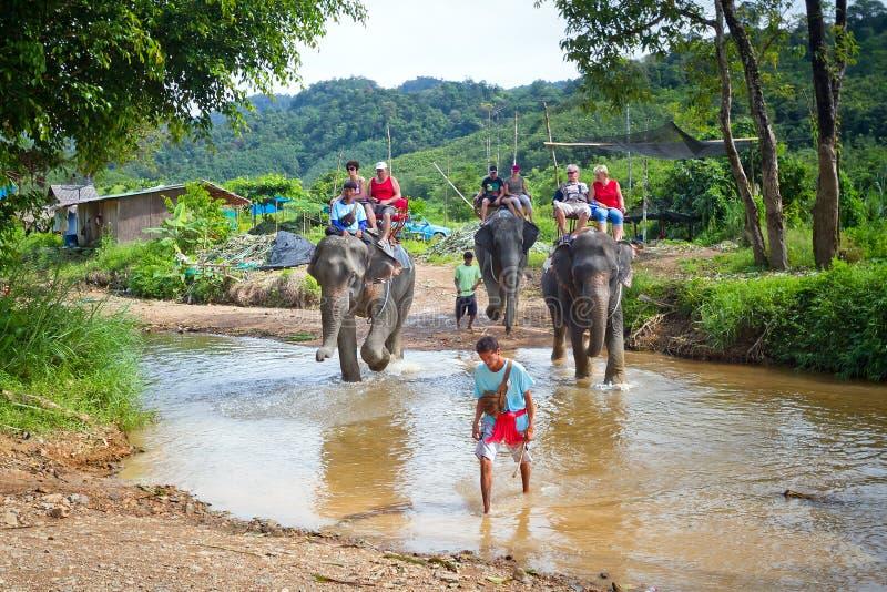 Elephant trekking in Thailand royalty free stock photo