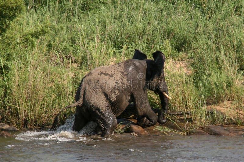 Elephant-vs-crocodile (2) Free Public Domain Cc0 Image