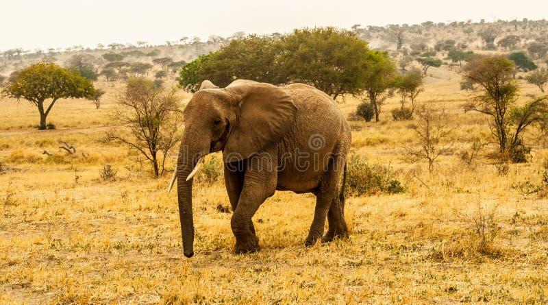 Download Elephant Walking Through Landscape Stock Image - Image: 27925591