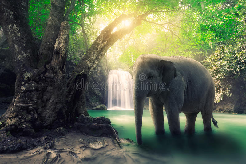 Elephant. At waterfall, Useful for background