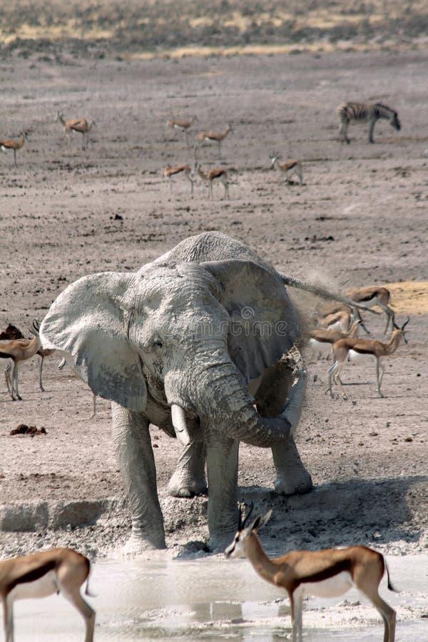 Elephant at Waterhole stock image