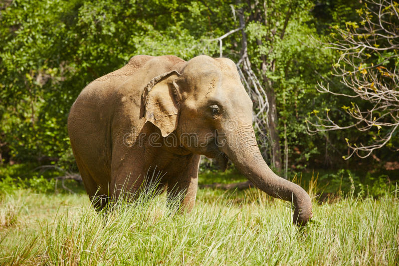 Download Elephant stock image. Image of strong, large, animals - 33454595