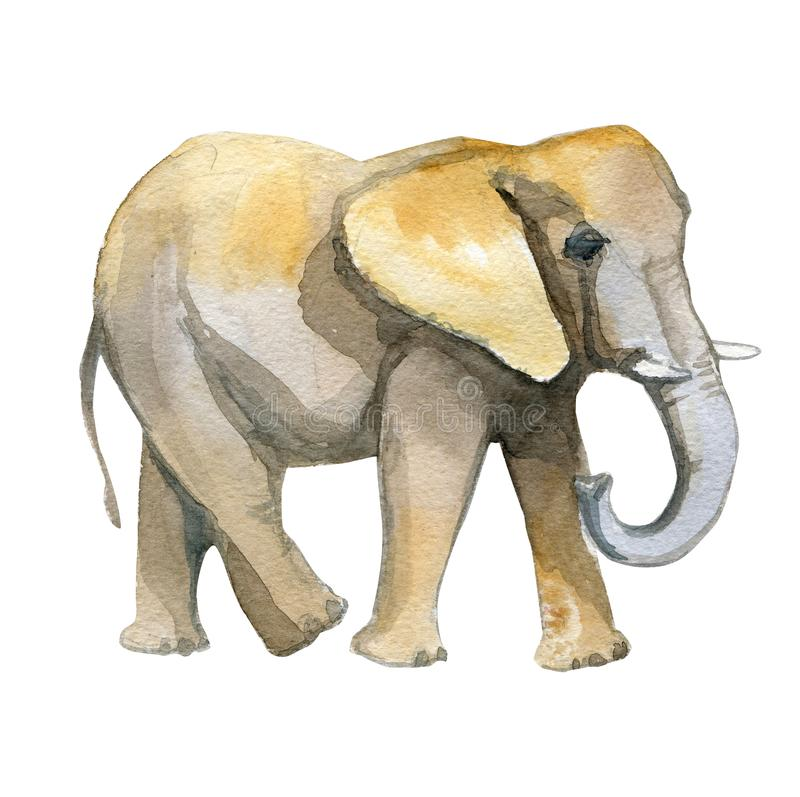 Elephant yellow watercolor realistic illustration. Isolated on white vector illustration