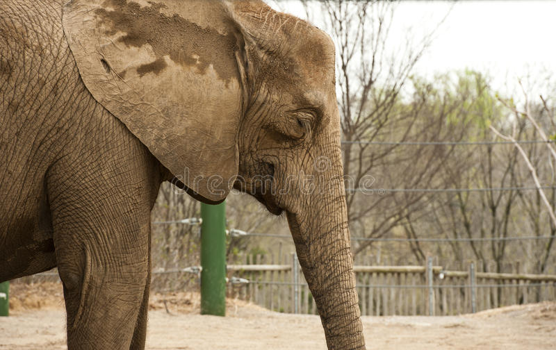 Download Elephant at zoo stock photo. Image of texture, animal - 23954946