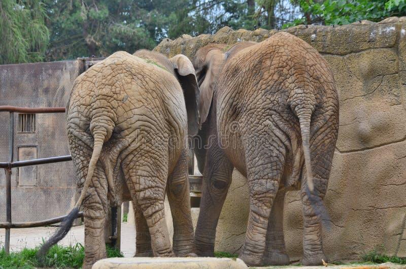 Download Elephant stock photo. Image of environment, czech, surroundings - 100524682
