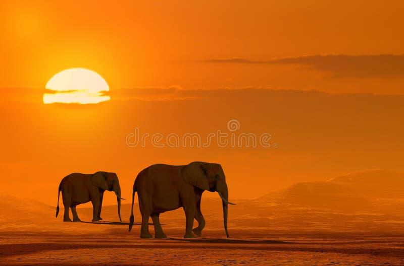 Download Elephants stock photo. Image of africa, animal, morning - 15769240