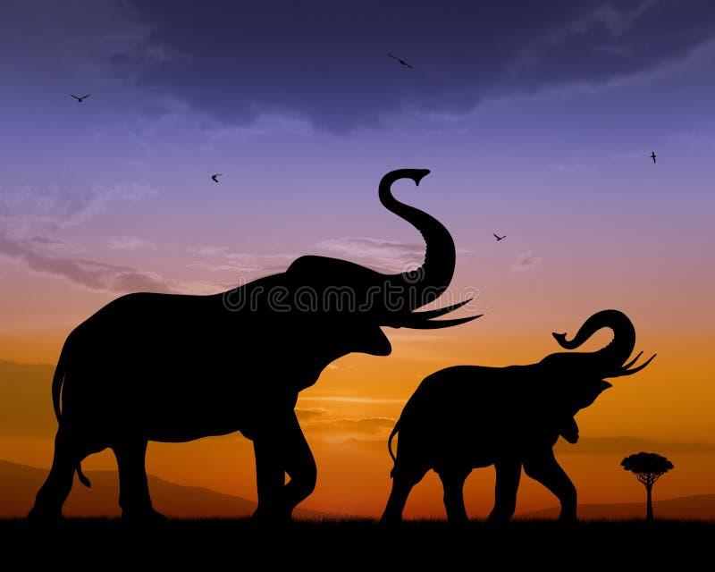 Elephants. Couple of elephants on sunset background royalty free illustration
