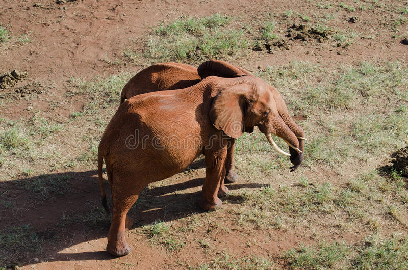 Download Elephants stock image. Image of feed, elephant, jungle - 24225131