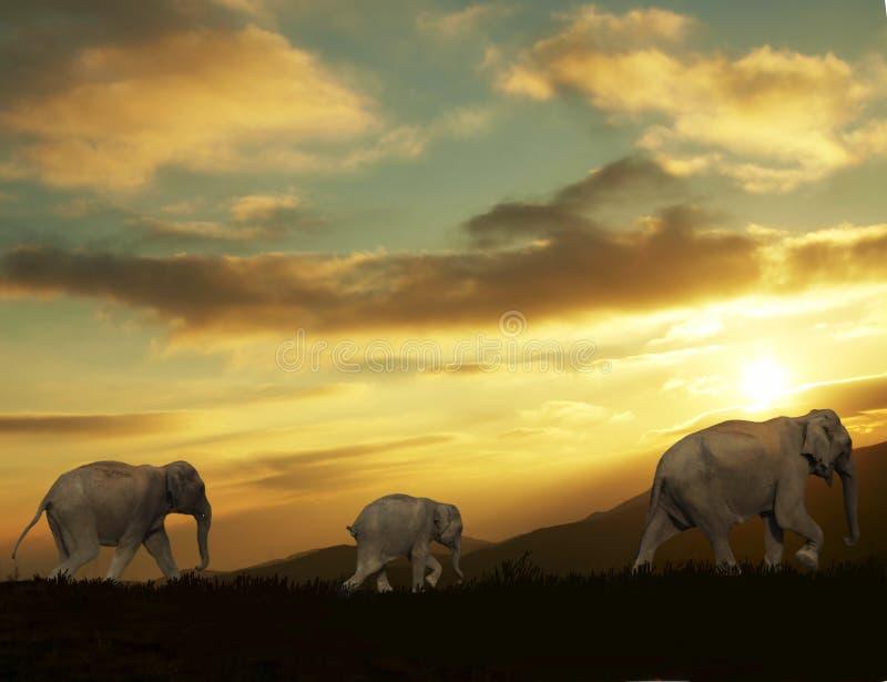 Download Elephants stock photo. Image of safari, animals, large - 2484120