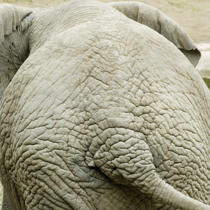 Free Elephants Backside Royalty Free Stock Photo - 2438325