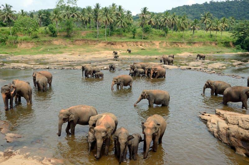 Elephants' bath stock photos