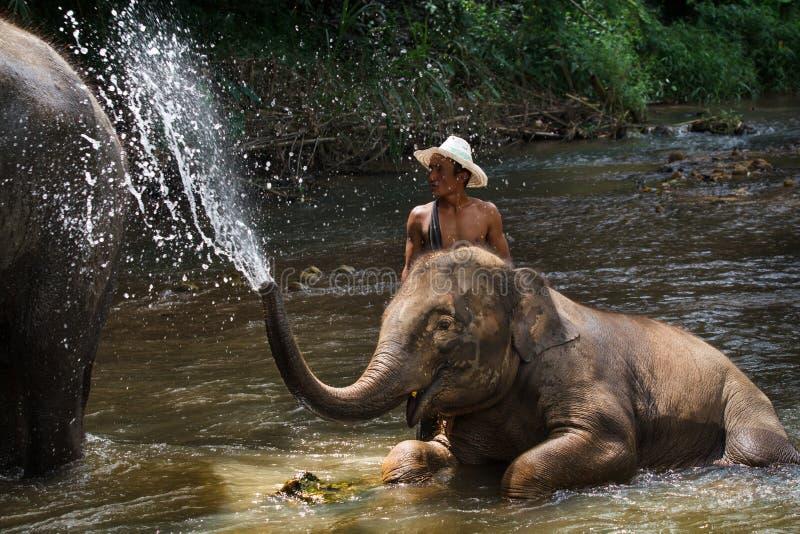 Daily elephants bath stock photo