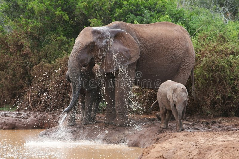 Download Elephants cooling down stock image. Image of mother, animal - 7532415