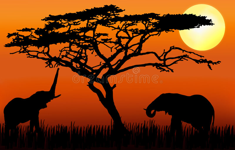 Elephants eating in sunset. Elephants in silhouette in sinset, eating from an acacia tree stock illustration