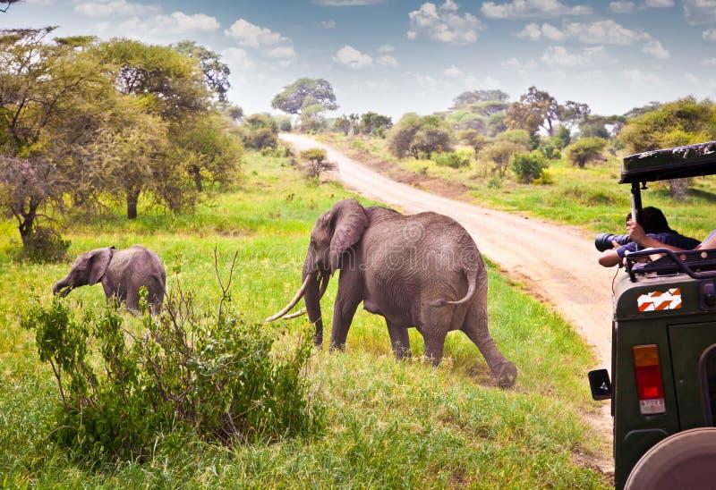 Elephants family on pasture in African savanna . Tanzania. stock image