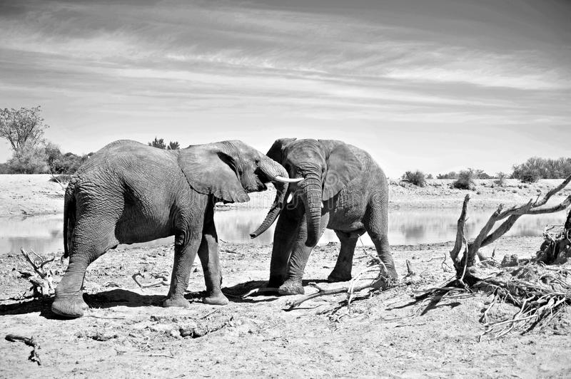 Download Elephants Fighting stock image. Image of mammal, conservation - 26960751