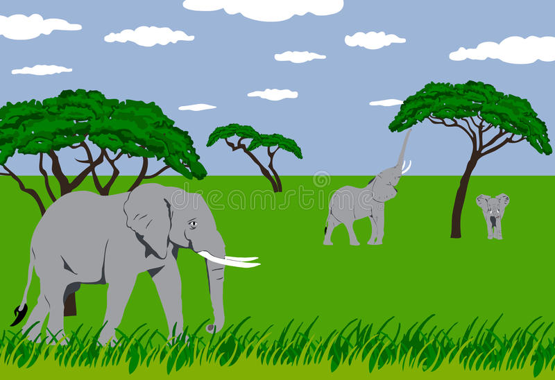 Elephants in grassland. Illustration of elephants standing and eating in grassland in an african scenery vector illustration