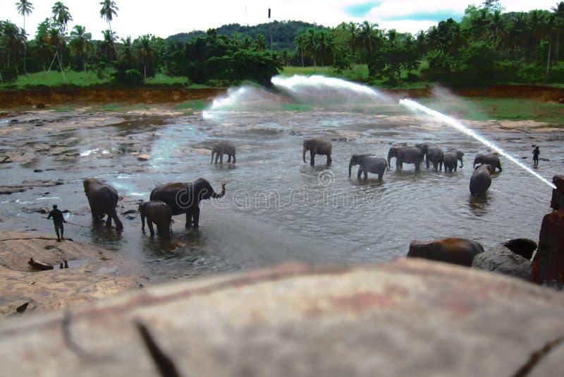 Washing elephants royalty free stock photos