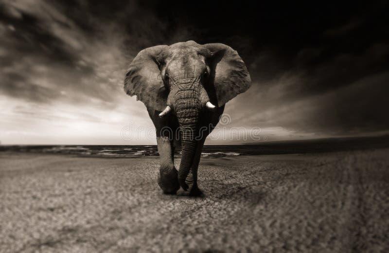 Elephants And Mammoths, Elephant, Black And White, Mammal Free Public Domain Cc0 Image