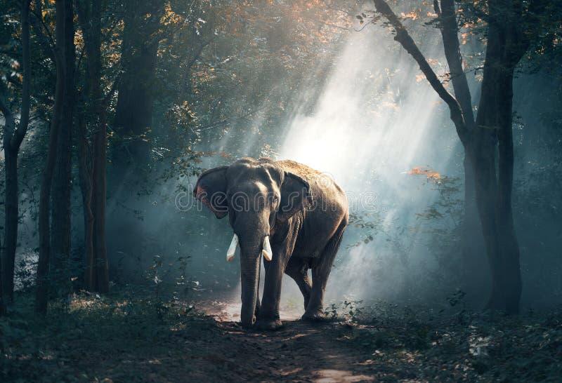 Elephants And Mammoths, Mammal, Indian Elephant, Vertebrate