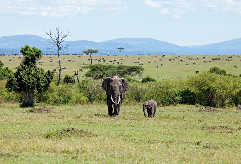 Download Elephants On The Masai Mara Royalty Free Stock Images - Image: 17023449