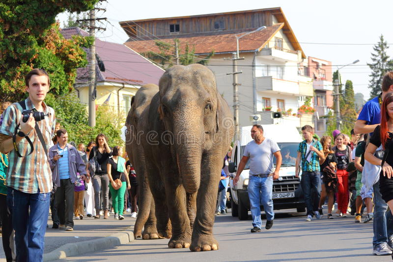 Download Elephants parade editorial stock image. Image of huge - 27055179