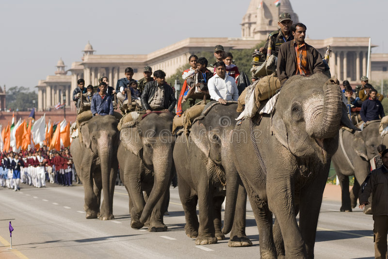Elephants on Republic Day Parade royalty free stock photography