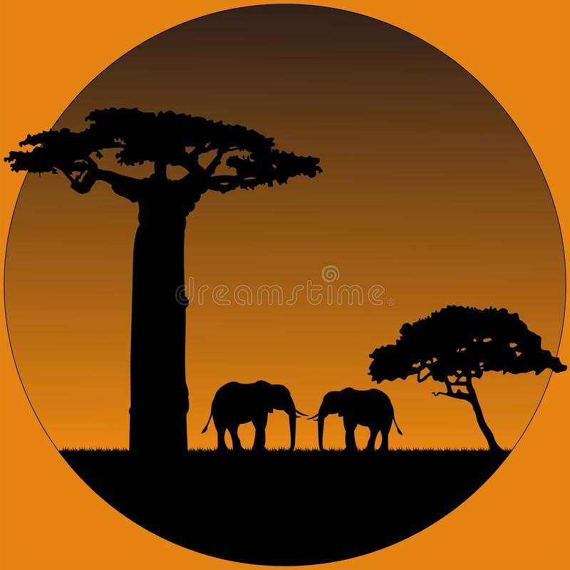 Elephants in savanna stock photo