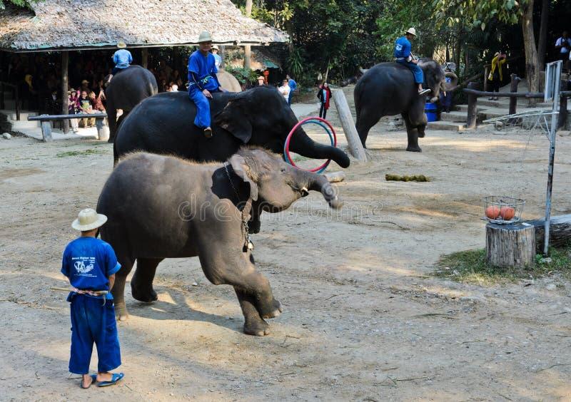 Elephants show at Maesa Elephant Camp stock photography