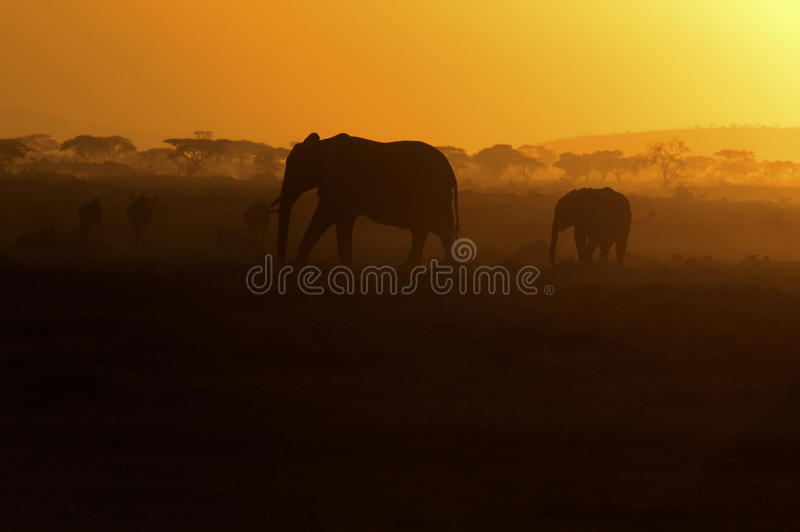 Elephants Silhouetted At Sunset, Africa Stock Images