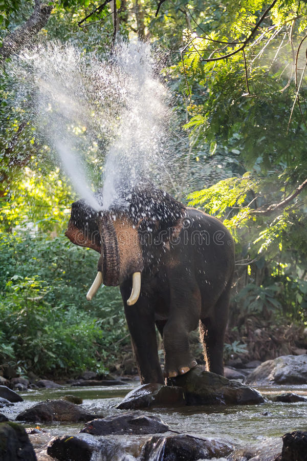 Elephants spraying water. In the stream with blurry motion royalty free stock images