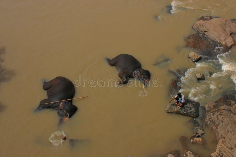 Elephants Sri Lanka stock photos