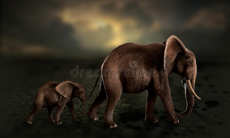 Elephants walking baby elephant in desert. Elephants walking in line, baby elephant following mother through a desert suffering drought vector illustration