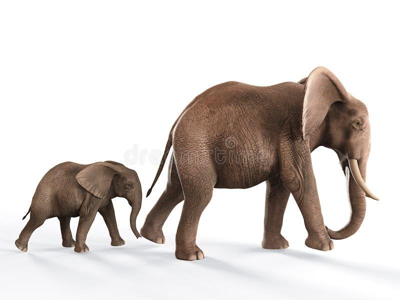 Elephants walking baby elephant. Elephants walking in line, baby elephant following mother on white background royalty free illustration