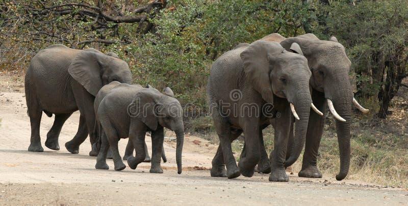 Download Elephants Walking On Dirt Road Stock Photo - Image: 19399968