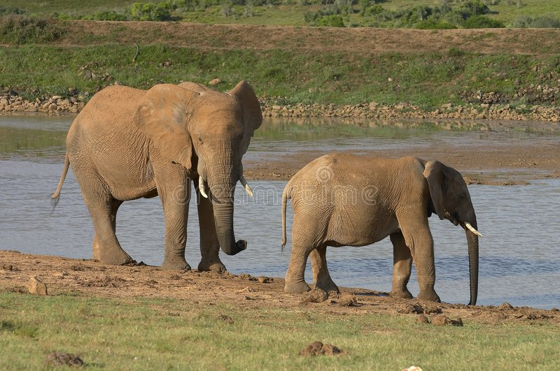 Download Elephants By The Water-lock Ll Stock Photo - Image: 2455064