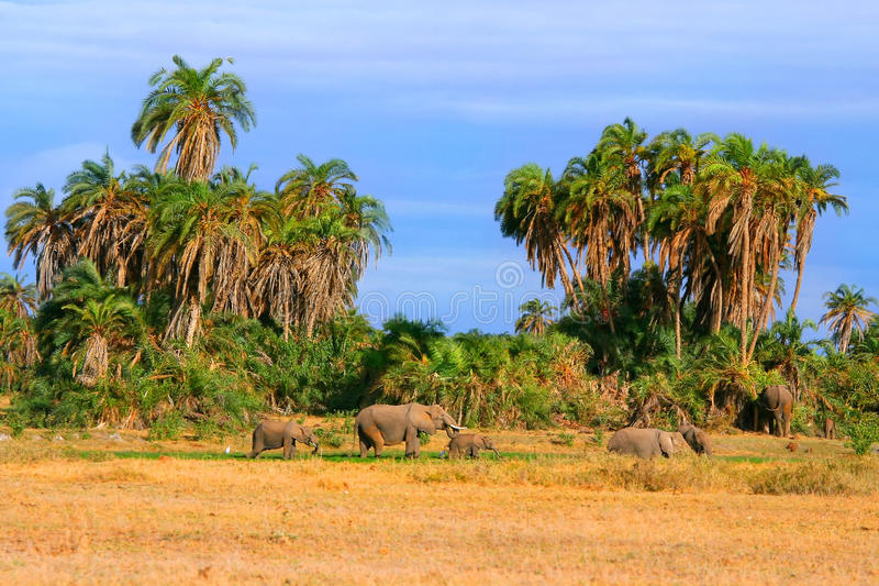 Download Elephants in the wild stock image. Image of grazing, land - 9829983