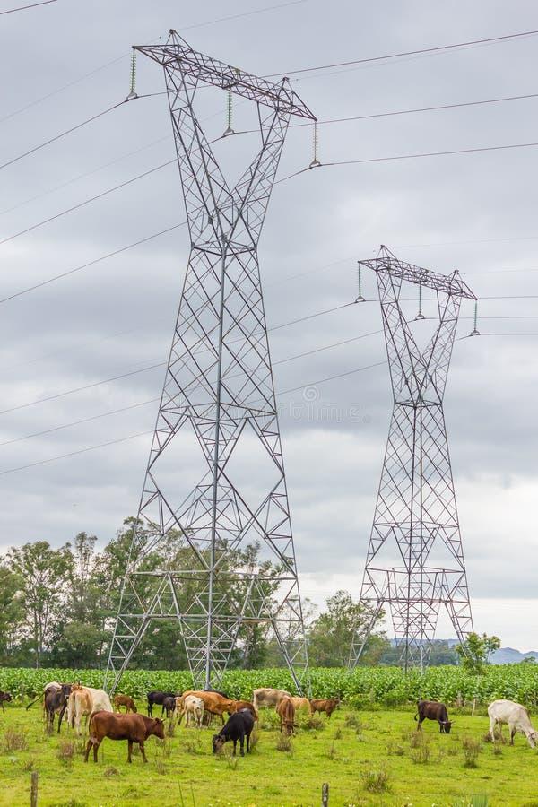 Eletric torn med kor och platns i en lantgård royaltyfri bild