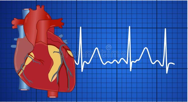 Elettrocardiogramma royalty illustrazione gratis