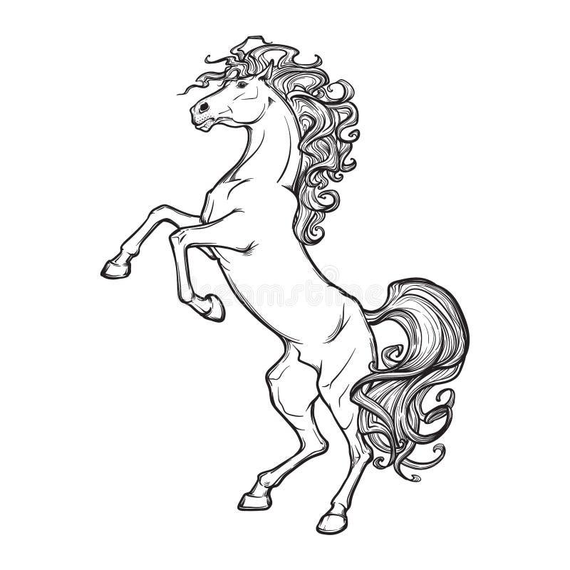Elevando o preto do cavalo na BG branca ilustração stock